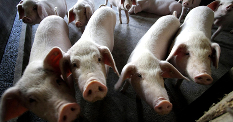Swine Flu Prevention Spell